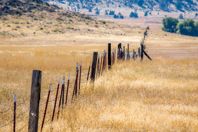 The Lost Fence Agriculture Arid Climate Beauty In Nature Bestoftheday Check This Out Eye4photography  Farm Fence Field Forlorn Grass In A Row Landscape Majestic Nature Non-urban Scene Open Repetition Rural Scene Scenics Tranquil Scene Tranquility Vineyard Wooden Post
