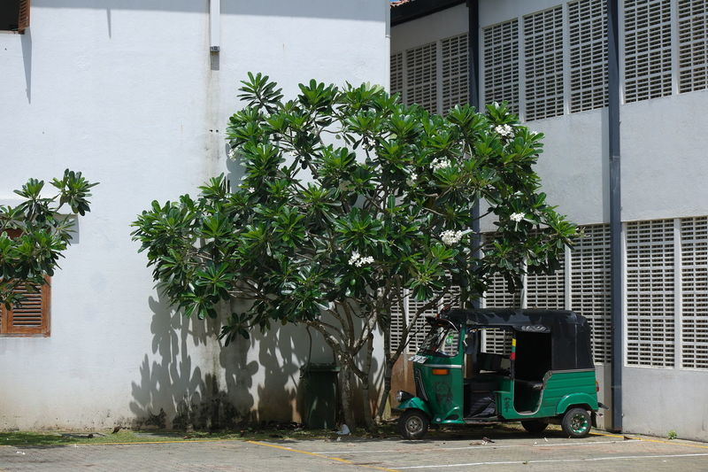 Tuc Tuc in Bentota Building City House Mode Of Transportation Nature No People Street Transportation Tree