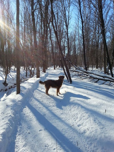 Snow ❄ Where Is The Dog Winter Trees Sunny Day