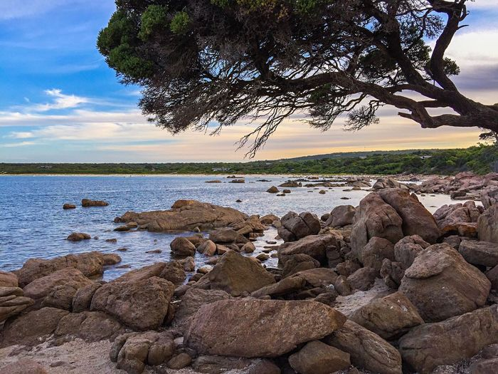 Twilight at Bunker Bay Tree_collection  Coastal Nature Seascape Tranquil Scene Ocean View Ocean Meditation Dusk Bay Beach Peaceful Place Sea Water Ocean Western Australia Rock Formation Bunker Bay Indian Ocean Australia Secluded Beach Coast Line  Australia & Travel Tourism Coastal Rock Rock