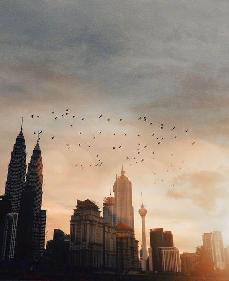 Flock of birds flying over city