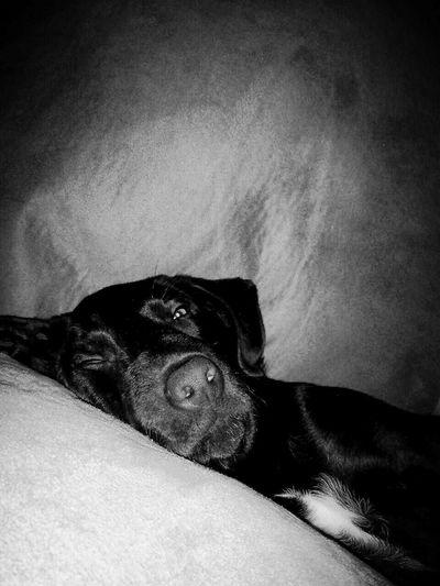 She's my baby.Mychocolatelab Chocolatelabrador Dog Bitches Sleepyhead Texas Blackandwhite Cheese! I Love My Dog Love