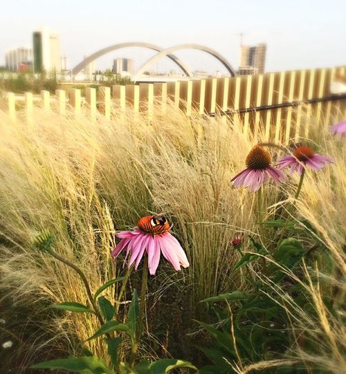 Bee Flowers Milano Expo GotIt Apemaia Ape Fiori Grass Erba