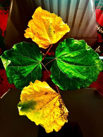 Close-up Leaf Green Color Plant Part Plant Nature Yellow Leaves