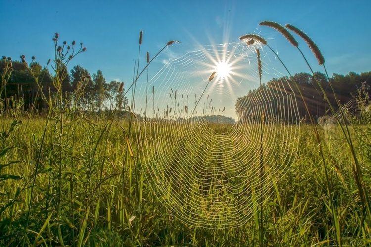 Close-Up Of Cob Web Against Green Landscape