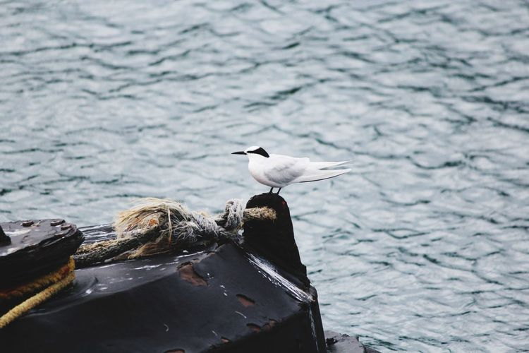 A bird sitting on the wooden stand