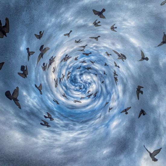 Avian Vortex. iPhone 6 & Circular app by BrainFeverMedia IPhoneography Mobilephotography Theappwhisperer AMPt_community Grryo Circular App Birds Clouds Vortex