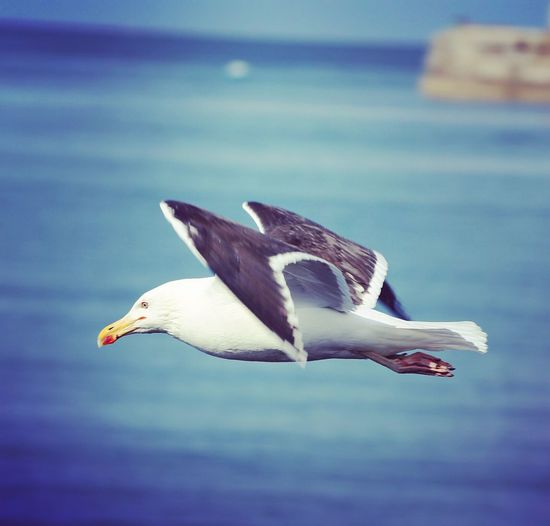 Close-up of seagull flying in mid-air