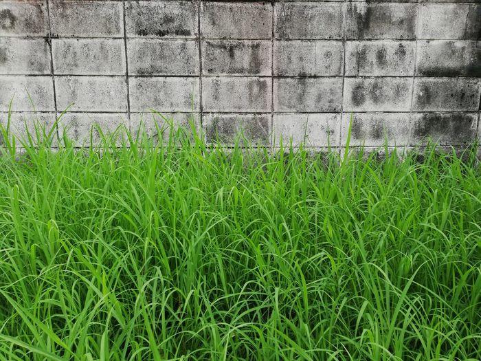 Grassy Field Against Wall