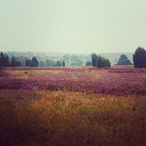 Leider wieder keine 🌞, aber dennoch sehr schöne Farben hier in der Lüneburger Heide Naturschutzgebiet Natur Lüneburgerheide Draußen