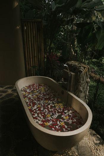 Spa Time #spa #bathtub #Nature  #moody #bath #bathroom #outdoor #Bali #Indonesia #Plant #water #flower#garden#nature#ecuador#santodomingoecuador#eyeEmfollowers#iphoneonly#nofiltrer#macro_garden#pretty#beautiful#followme#sho