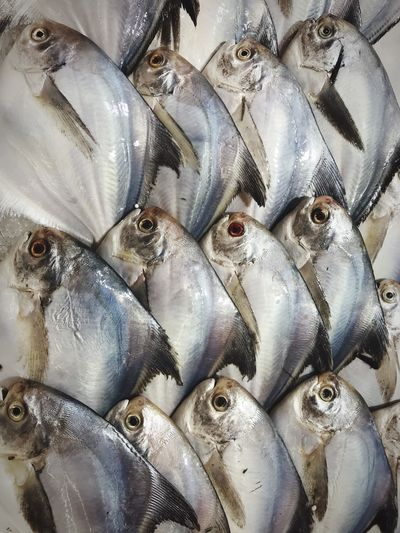 Pomfret Silver on display in a supermarket IPhoneography Food Fish Pomfret Full Frame Backgrounds Seafood Fish Animal No People Close-up Indoors  Vertebrate Large Group Of Objects Raw Food Food And Drink Animal Themes Food Abundance For Sale Pattern Freshness