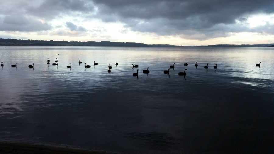 Birds Floating On Water