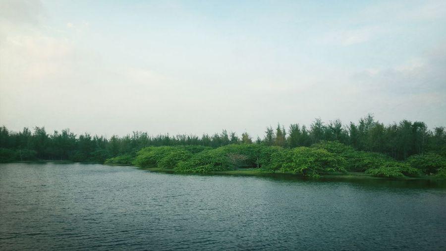 Green Lakeshore