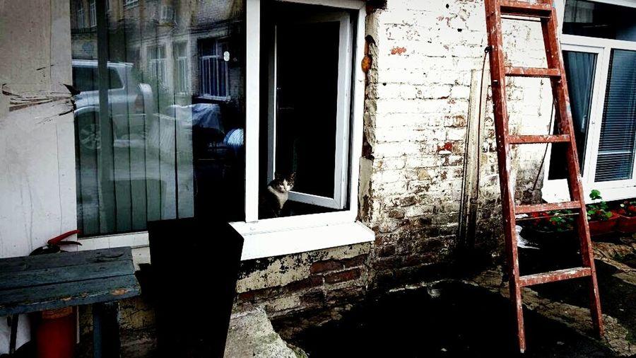 Urban Cat In A