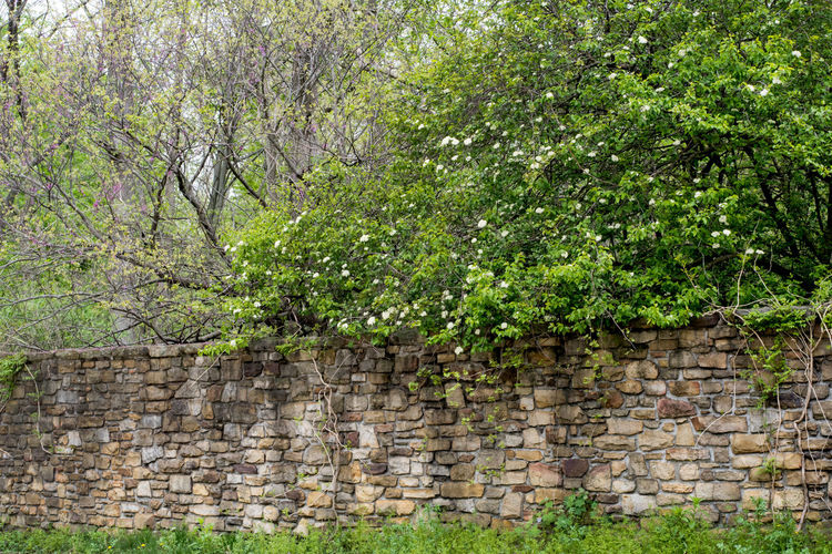 Beautiful old stone wall with flowering trees blooming from behind in the garden. A pretty spring day Architecture Nature Texture Color Tree Floral Rock Antique Beautiful Vintage Structure Decorative Old Beauty Foliage Retro Brick Flora Background Grunge Pattern Design Wallpaper Garden Space Exterior Brown Colorful Season  Stone Natural Red Wall House Backdrop Green Plant Spring Grass Leaf Flower Park Walled Garden Springtime Greenery Wall - Building Feature Growth Green Color Built Structure Stone Wall