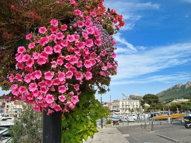 Flower Day Architecture Cloud - Sky Outdoors Sky Growth Tree Built Structure Nature Building Exterior No People Beauty In Nature Lumicar Beauty In Nature Nice Day Nautical Vessel Harbor Travel Photography Picoftheday Photooftheday Travel Destinations Cassis Côte D'Azur