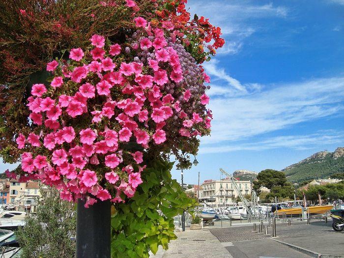 Pink flower tree against sky