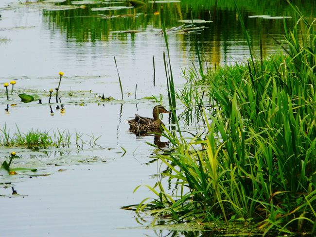 Animals Summer Memories 🌄 Nature Nature On Your Doorstep Somerset Levels Uk In All Its Glory Hello World