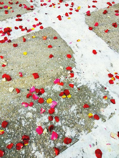 Rose petals on the snow on the stone porch Abstract Abstract Photography Rose - Flower Roses Petal Snow Stone Holiday Wedding Wedding Photography Scattered Happy Newlyweds Just Married Red Backgrounds White Color Full Frame Paper Beauty Ink No People Day Outdoors