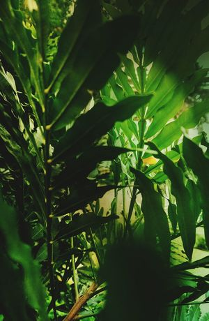 Green Color Nature Leaf Growth Agriculture Plant Social Issues Freshness Beauty In Nature Outdoors Abstract Shapes And Textures Abstractions In Colors Light And Shadow Hand Palm Still Life Color Palette
