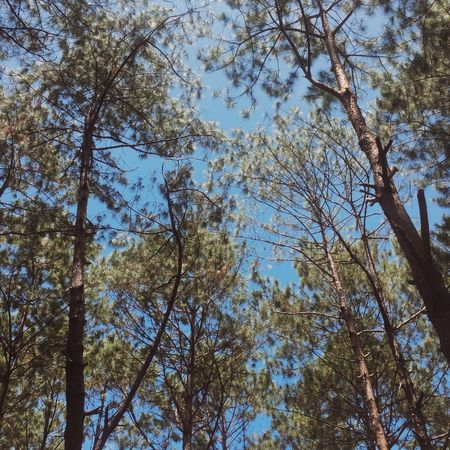 Breather. Low Angle View Nature Growth Branch No People Sky Tranquility Outdoors Day