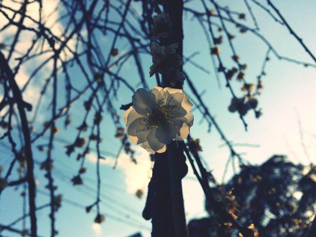 Nature Nature Flower Plant No People Springtime White
