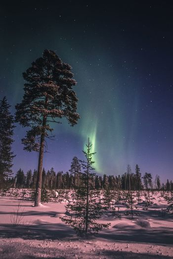 Polar lights and beautiful nature Tree Night Beauty In Nature Sky Tranquility Astronomy Snow Tranquil Scene Star - Space Winter Nature No People Landscape Outdoors Northern Lights Aurora Borealis Nature_collection Photography Travel Moonlight Pine Tree Explore Low Angle View Forest Freshness