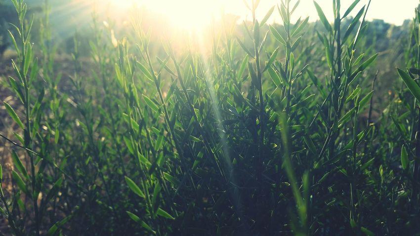 Sun Sun Rays Spring Sun And Spring Beautiful Nature Photography Nature Beautiful Nature Nature Collection ☉☉ ❤❤ ☉🌞🌞☉ ☉☉☉ ☉ هه