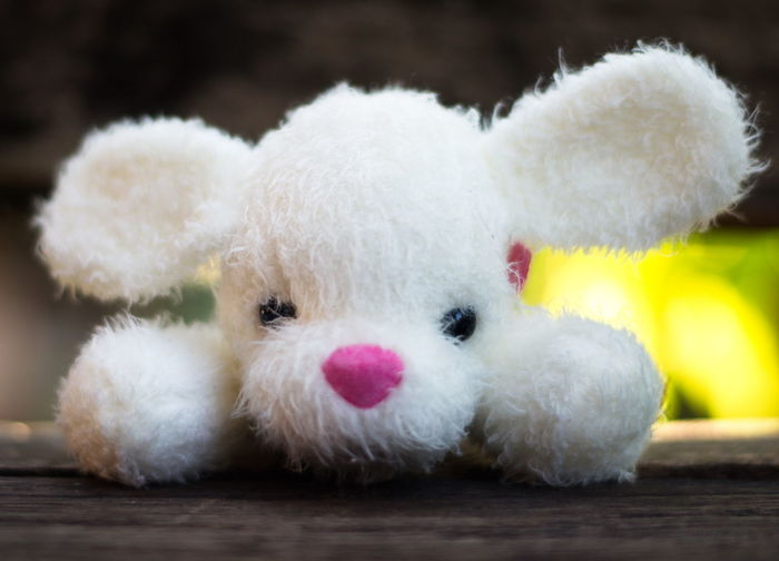 Dog doll. Animal Animal Representation Animal Themes Close-up Cute Domestic Domestic Animals Fluffy Focus On Foreground Indoors  Innocence Mammal No People Representation Selective Focus Softness Stuffed Toy Teddy Bear Toy White Color