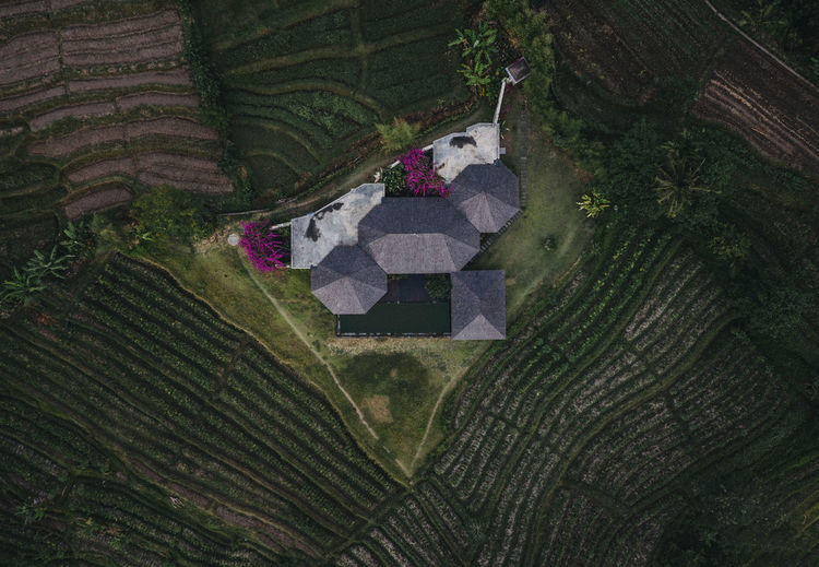 Plant High Angle View Land Nature Landscape Agriculture Rural Scene Tree Day No People Field Aerial View Architecture Farm Growth Environment Scenics - Nature Green Color Outdoors Crop