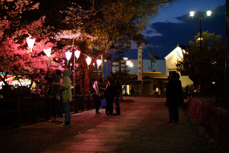 夜桜 Cherry Blossom City Tree Illuminated Men Nightlife Women Sky
