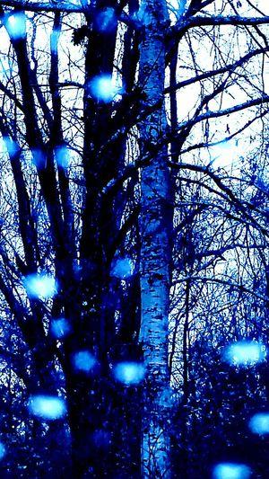 Trees Rainy Day Blue Trees Got The Blues Nature Photography