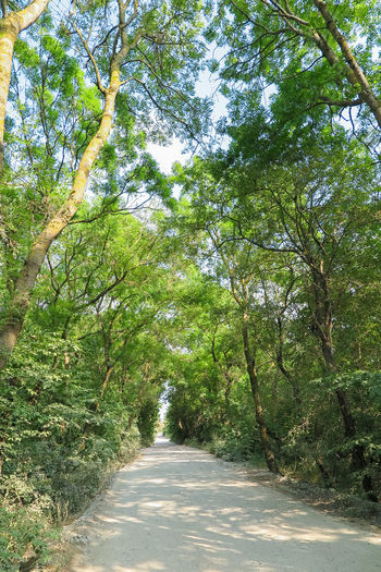 thick overgrown trees over the road Plant Direction Tree The Way Forward Road Growth Nature Beauty In Nature Day Green Color Transportation No People Diminishing Perspective Tranquility Sunlight Forest Land Outdoors Tranquil Scene Empty Long Tree Canopy  Treelined