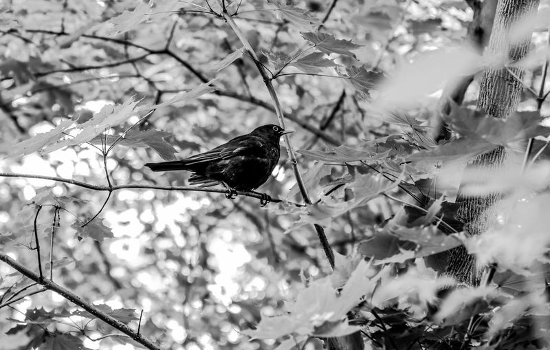 Animal Animal Themes Animal Wildlife Animals In The Wild Beauty In Nature Bird Branch Day Focus On Foreground Growth Leaf Nature No People One Animal Outdoors Perching Plant Selective Focus Tree Vertebrate