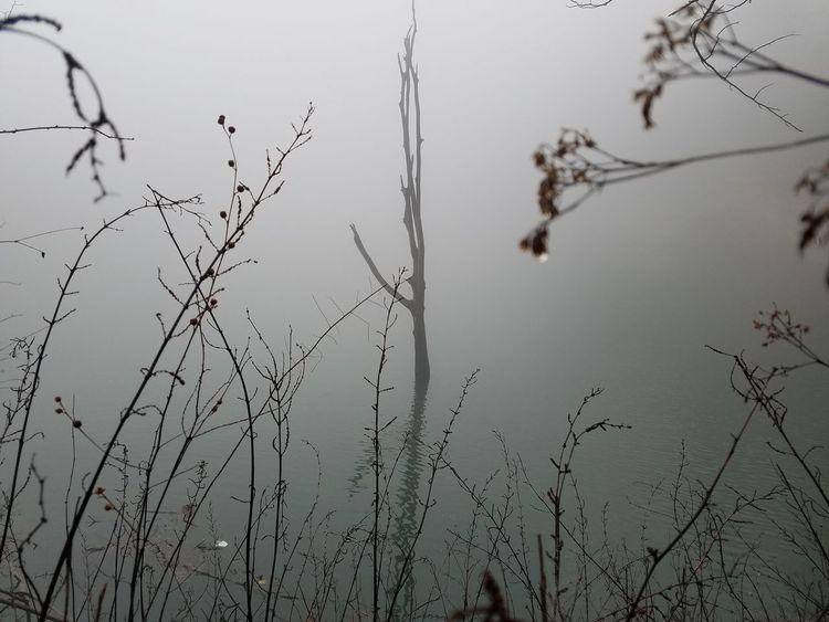 Bird Tree Water Sky