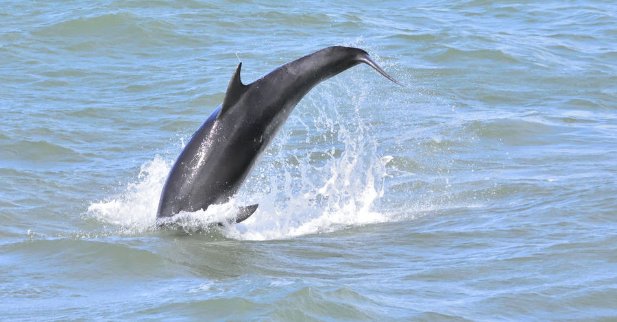 Beautiful Nature Beauty In Nature Bottlenose Dolphins Elegant Energetic Graceful Happy Mother And Calve Playful Relaxed Tursiops Truncatus
