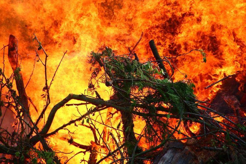 Fire Forest Fire Wildlands  Hot Feuer Waldbrand Feuer