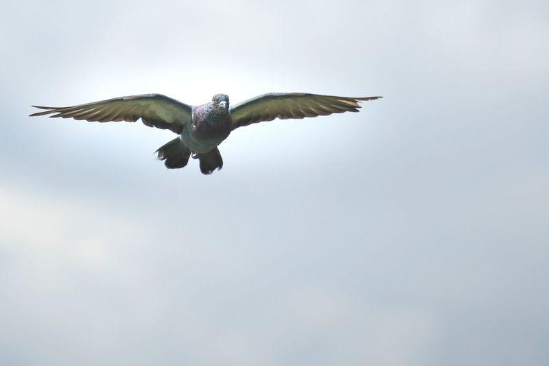 #bird Landing