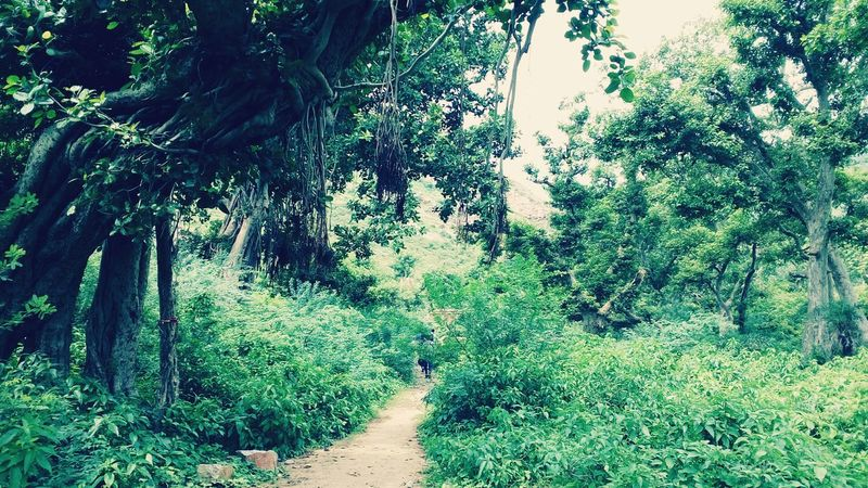 Way To Infinity Ghost Real Fear Friends ♥ Bhangarh Forest Trees Jk Greenry Travelling