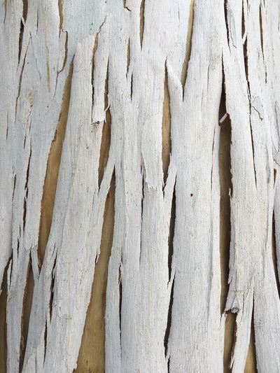 Full frame shot of dry bark