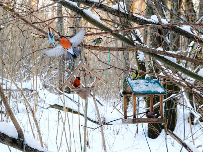 View of birds perching on snow covered branches
