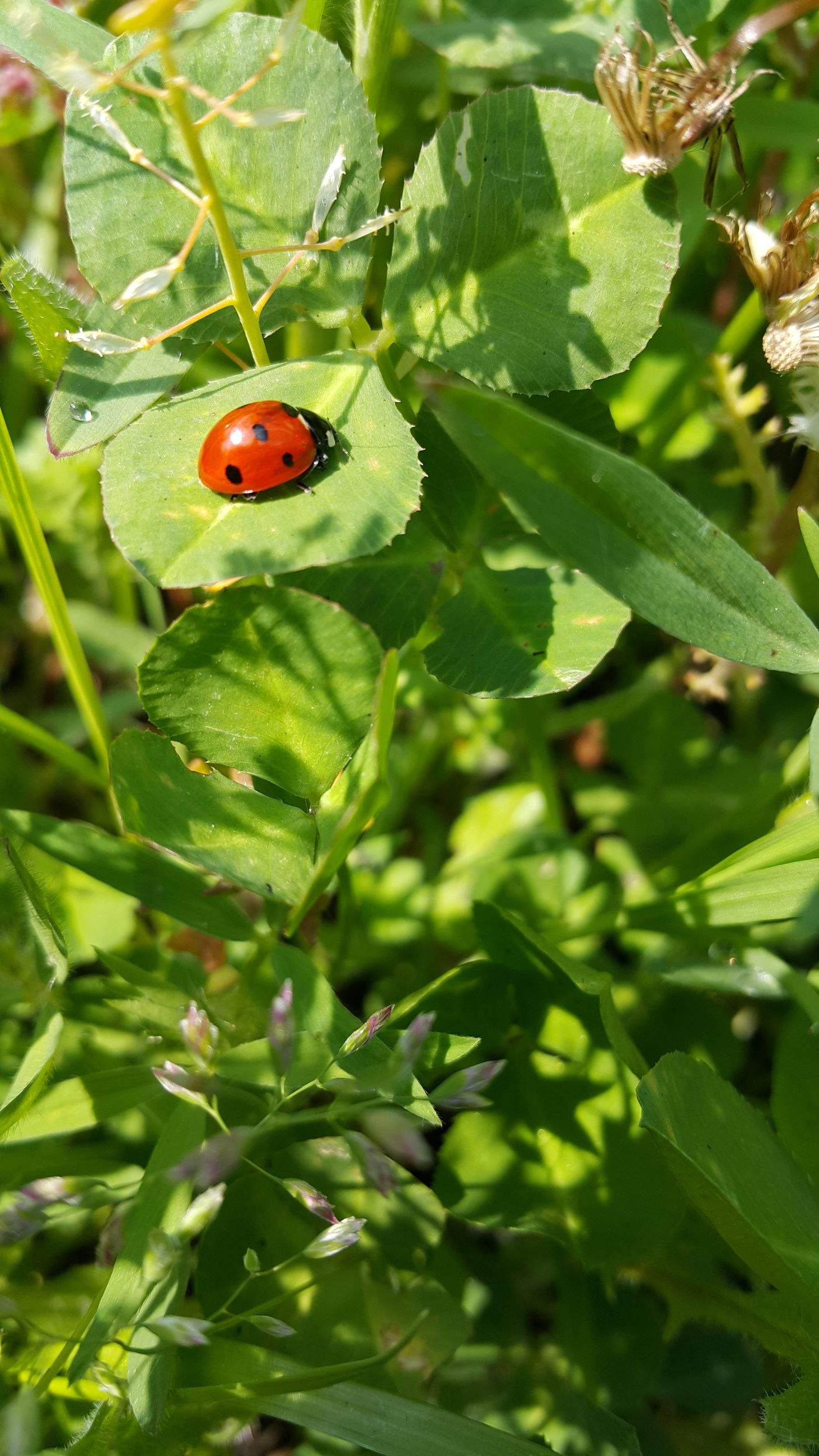 insect, animals in the wild, animal themes, leaf, wildlife, one animal, green color, ladybug, close-up, growth, plant, nature, red, beauty in nature, focus on foreground, day, selective focus, freshness, no people, outdoors