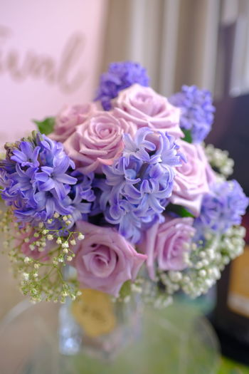 Close-up of purple roses
