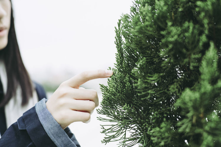 Cropped hand touching christmas tree