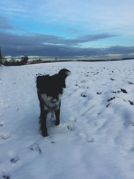 Snow walks EyeEmNewHere One Animal Mammal Animal Themes Animal Pets Domestic Canine Dog Snow Nature Sky Domestic Animals Cold Temperature Winter Beauty In Nature EyeEmNewHere