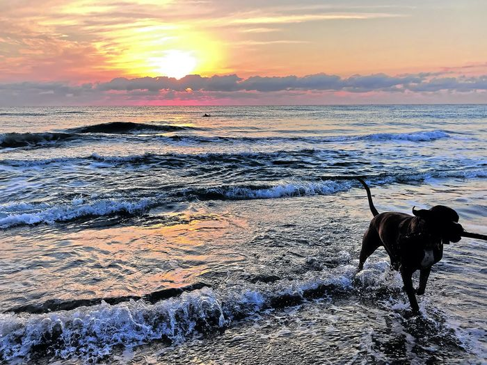 Dog on beach during sunset