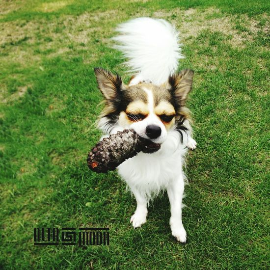 Cool Dog Cool Stuff Cigar Pictureoftheday Funny Just Chillin'