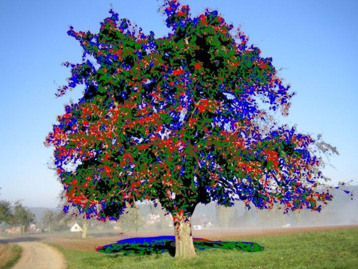 apple tree Apple Tree Multi Colored Nature Single Tree Vectorized