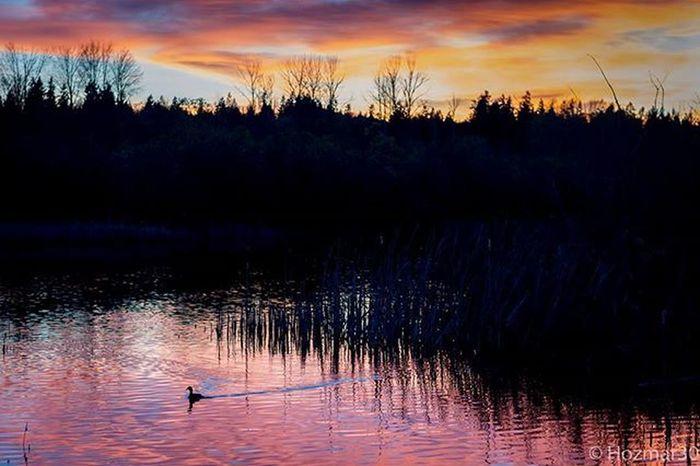 Sunsetlovers Sunset_pics Colorful Colors PNWonderland Cascadiaexplored Pacificnorthwest PNW Lakesammamish